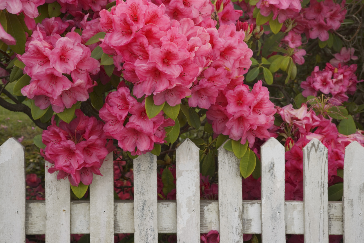 13 poisonous plants in your garden toxic plants that could kill you