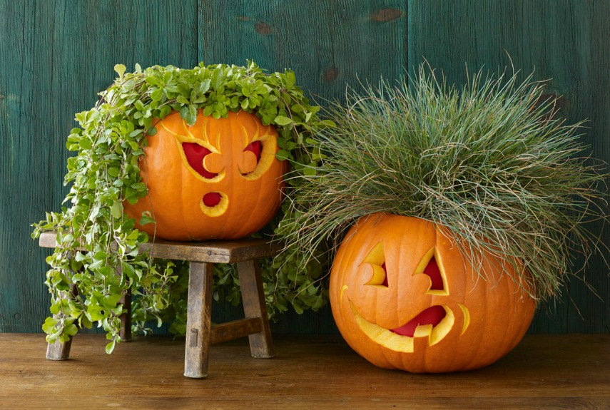 Top your pumpkin with its very own plant toupee. Carve out the top of the gourd and tuck in a pot of grass or ivy for a truly awesome hairdo. 