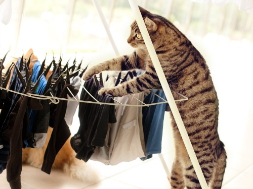 Cats Who Clean Cleaning And Organizing Fun