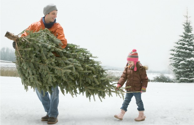 How To Keep A Christmas Tree Fresh Longer - How to Make Your ...