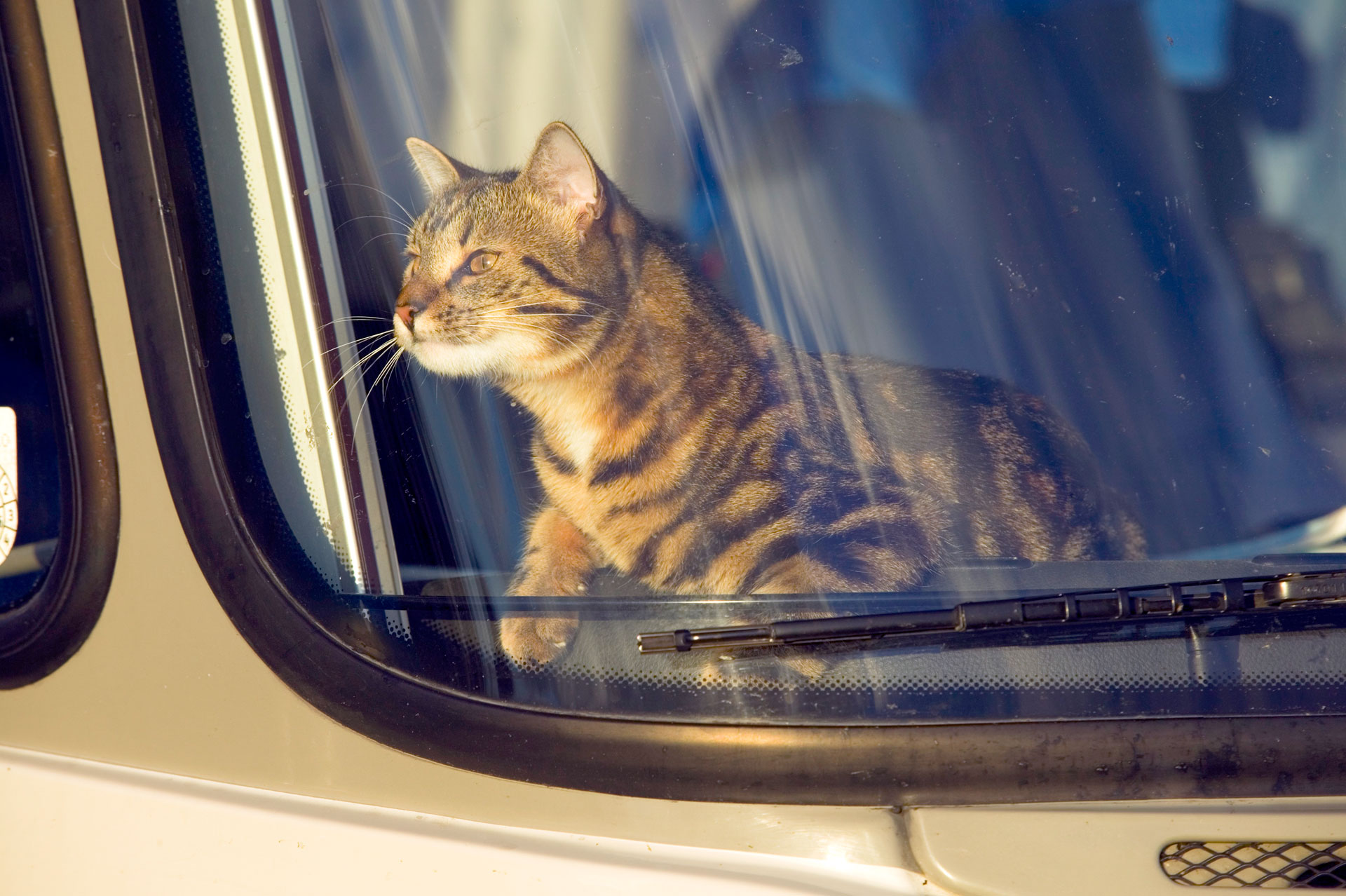 cat and dog etiquette petiquette pet owner manners and tips