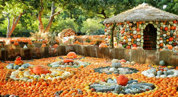 Dallas Arboretum Pumpkin Village Halloween Family Activities