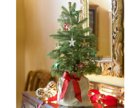 live plantable or bulb trees - Mini Live Christmas Trees