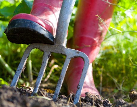 Organic Gardening How to Start an Organic Garden