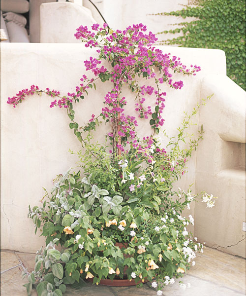 13 container gardening ideas - potted plant ideas we love - Patio Gardening Ideas