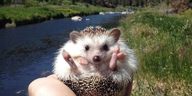 Animal Instagram Accounts You Have To Follow Cute Animal Photos - 30 cutest pictures ever babies posing animals