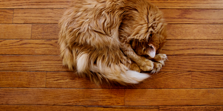 Cleaning Wood Floors How To Care For Wood Floors