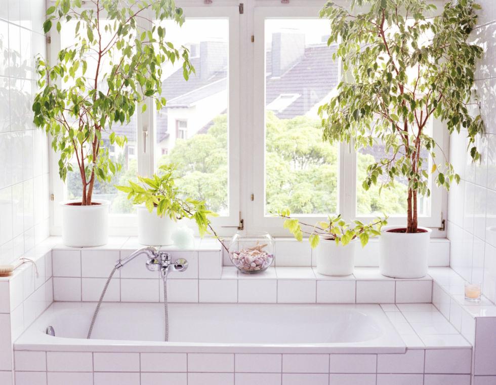54fe8a3c34c81 bathtub plants de