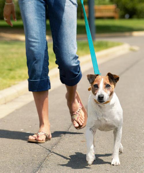 熱中症 ペット 対策
