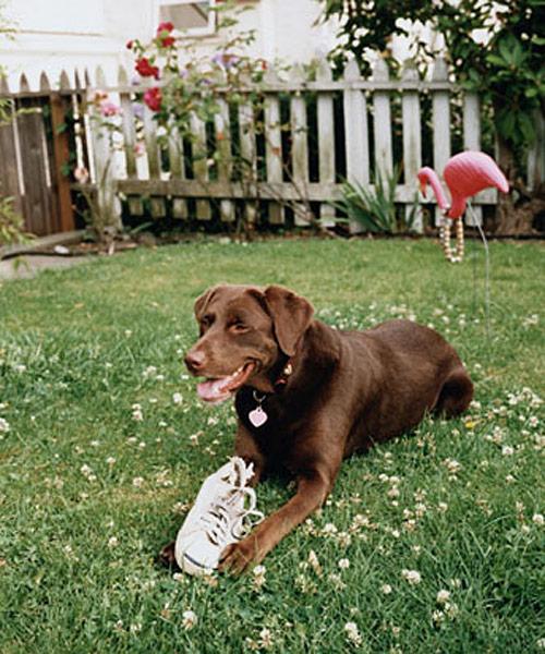 keeping your dog in the yard - dog training - dog behavior
