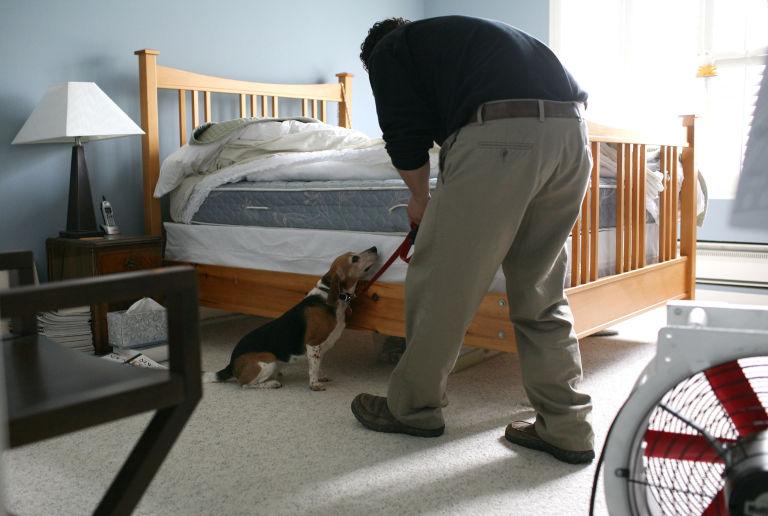 Teaching Dog to Reach Under Bed