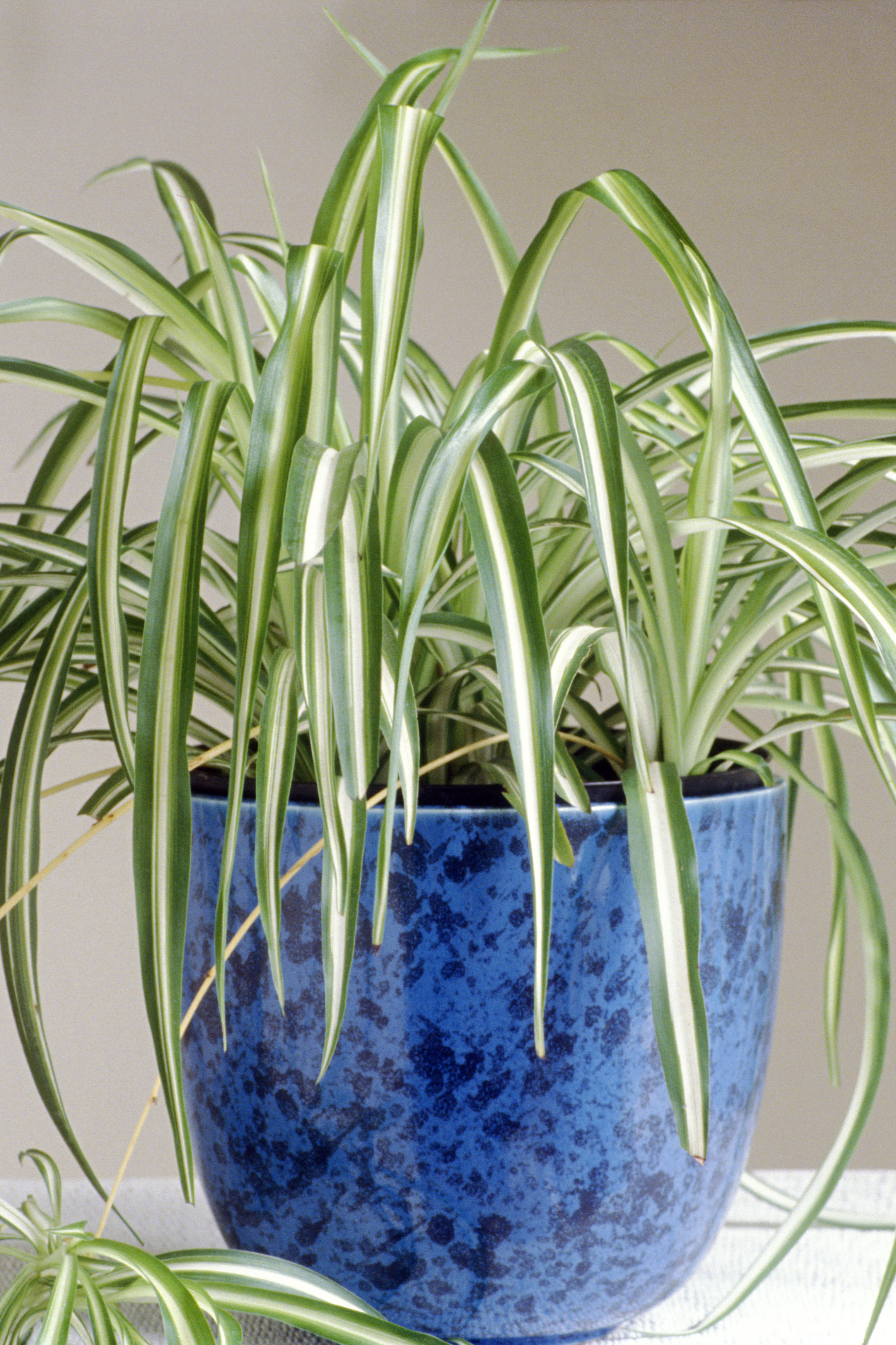 20 Easy Houseplants - Easy To Care For Indoor Plants